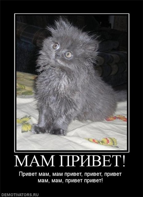 Бог создал Кошку, чтобы у человека был тигр, которого можно погладить.