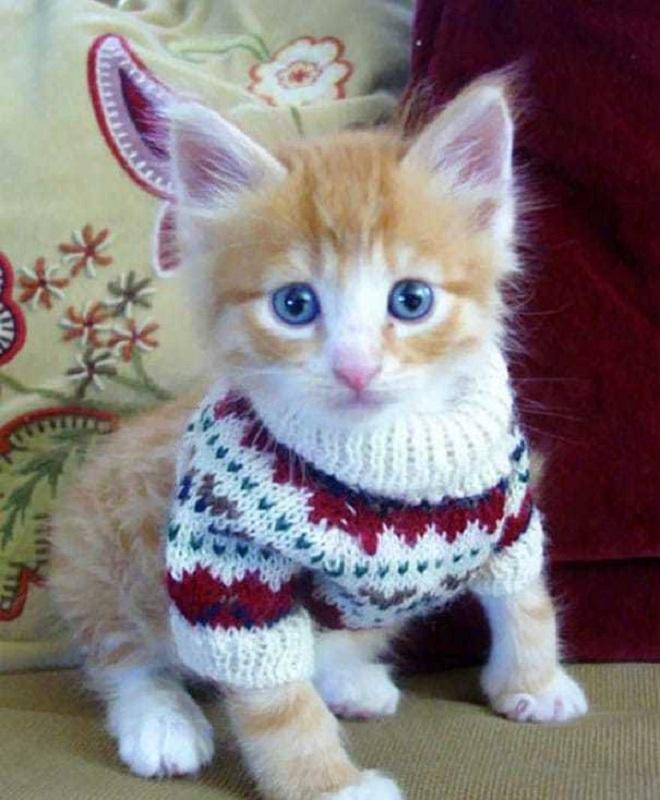 «А нам не холодно!»: 12 забавных фотографий питомцев, которых одели в теплые вещички животные