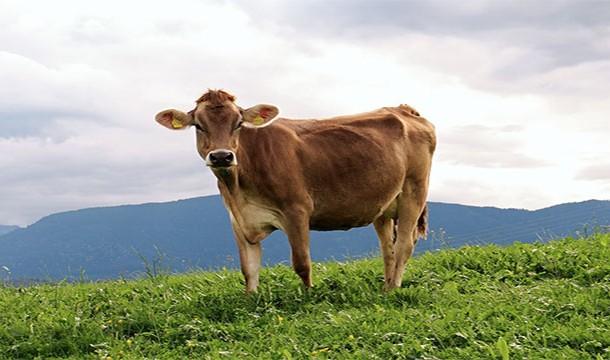 Чего мы не знали о мясе и мясных продуктах