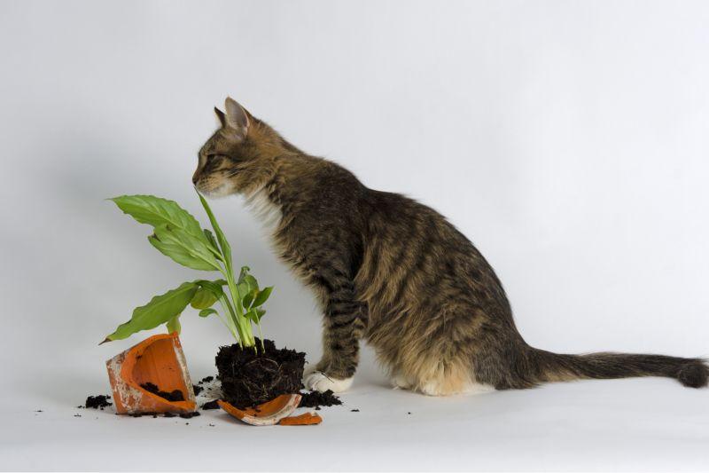 Кодекс домашнего кота