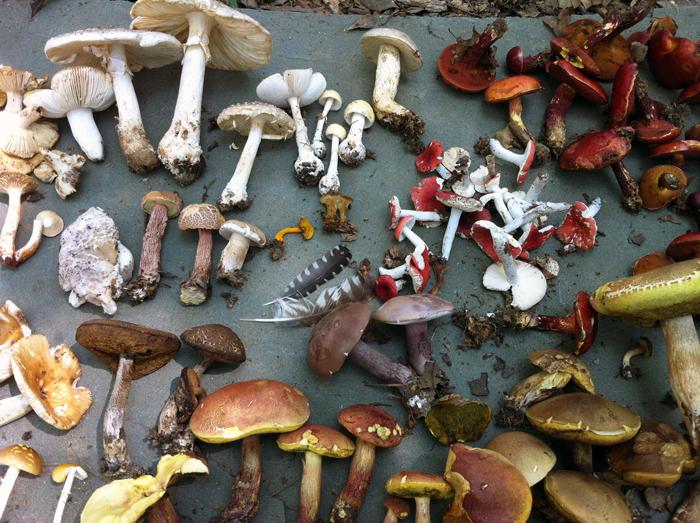 Натуральное крашение грибами: все цвета радуги