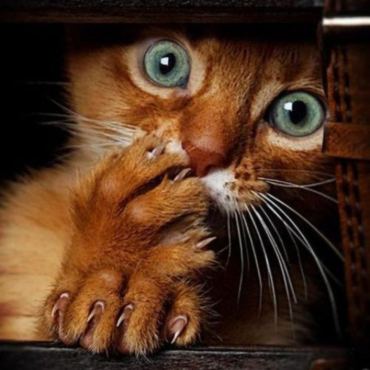 Картинки по запросу фото шкодливых котов