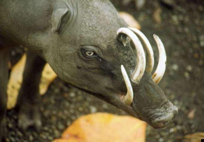 5 настолько редких животных, что люди считают их выдуманными