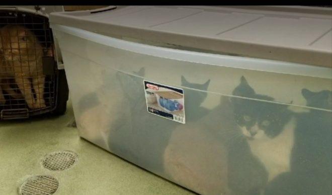 «Они не могли дышать»: в багажнике был найден контейнер, а в нем — котики