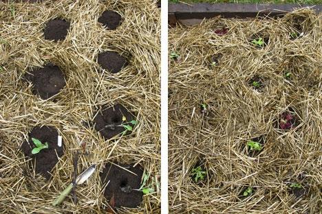 Органическое земледелие, пермакультура: теплые грядки сажаем рассаду