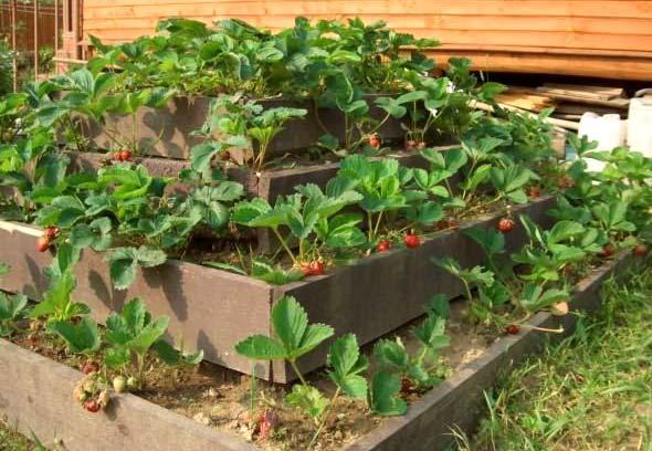 Секреты размещения огорода на небольшом участке