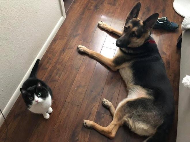 Кот-лекарь: почувствовав, что пес заболел, мурлыка стал о нем заботиться
