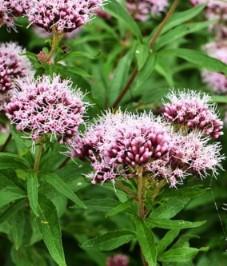 Растительные антидепрессанты: состав, действие и возможные побочные эффекты.