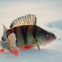 Ловля на большие мормышки - снасти и способы ловли (Сибирская рыбалка)
