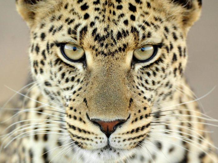 Животные в объективе