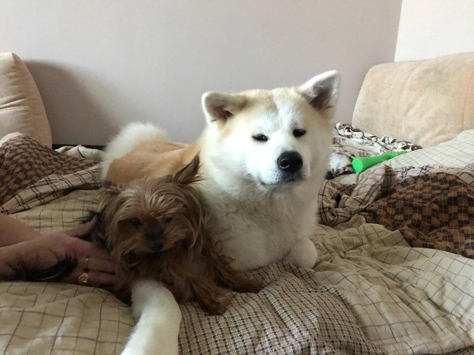 Ёрк и Хлоя