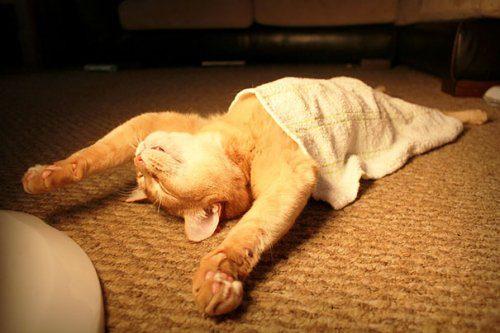 Позитив зверско-умилительный. Спящие котята