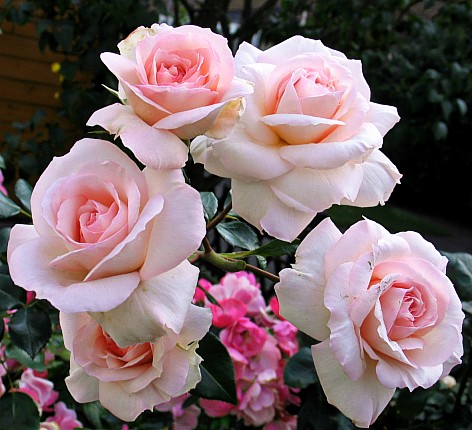 Весенняя обрезка роз от Юлии Тадеуш