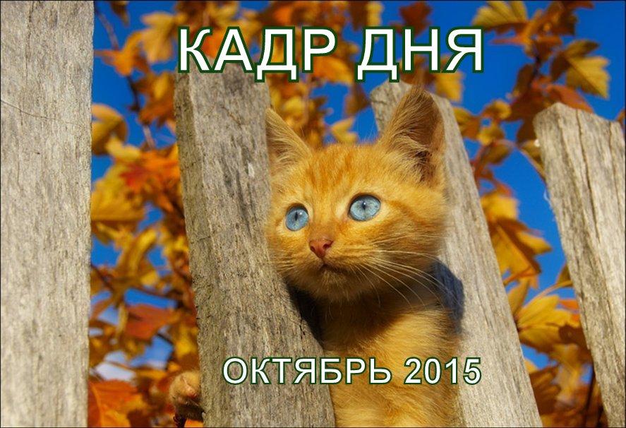 Кадр дня: От скуки…))