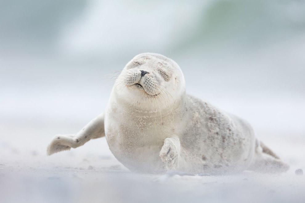 Картинки тюлень прикольные, днем