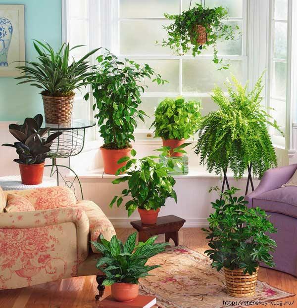6 правил ухода за комнатными растениями зимой.
