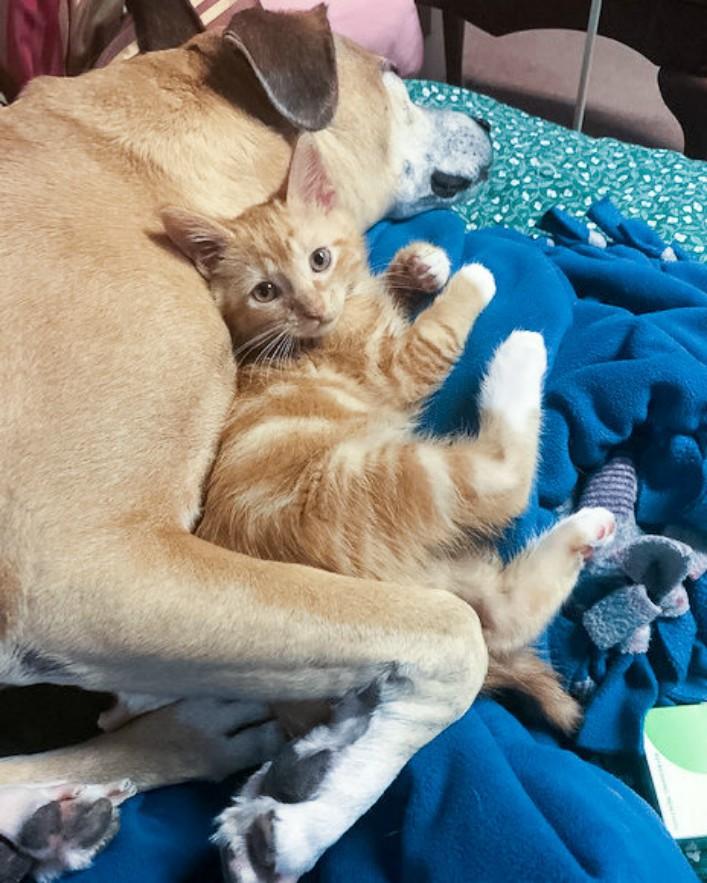 Спасенные котенок и пес нашли друг друга, и теперь неразлучны дружба животных, история, история спасения, кошки, собаки, спасение животных