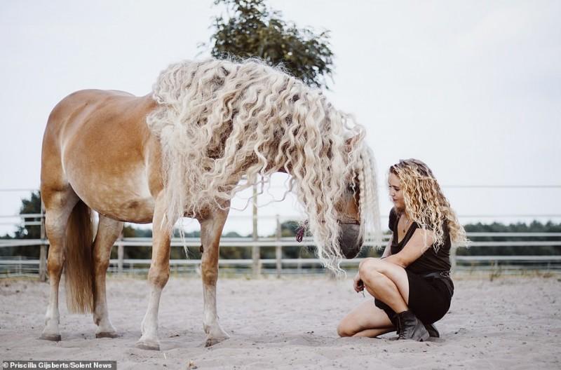 В Интернете нашли лошадь, похожую на диснеевскую принцессу