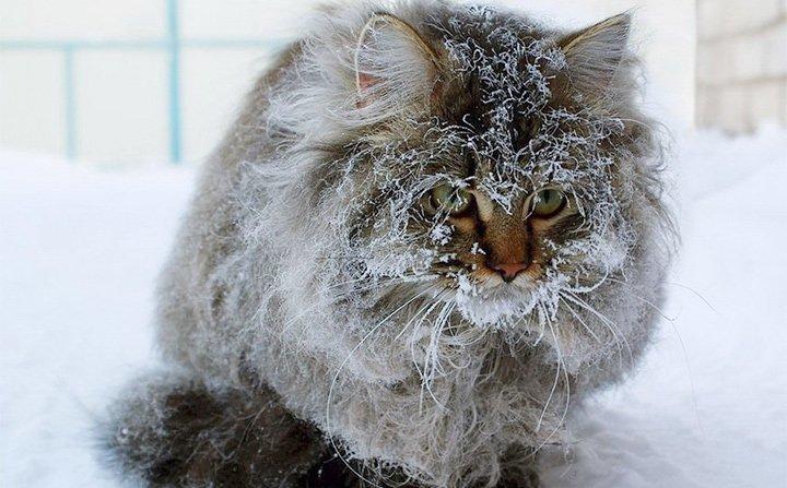 Кот, вмерзший лапами в лед добро, животные, спасение