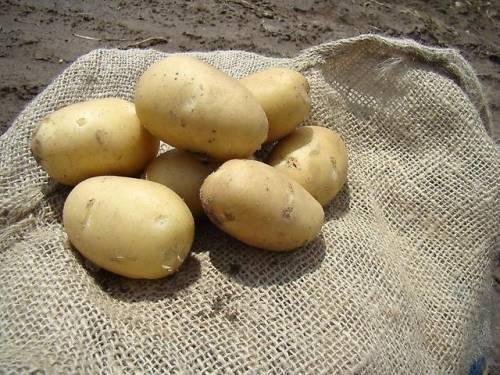 7 признаков качественного семенного картофеля