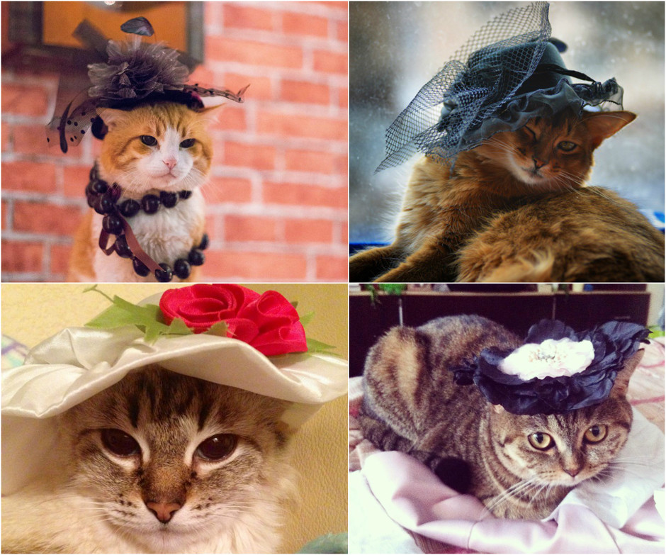 Кошечки такие кошечки: лучшие фото