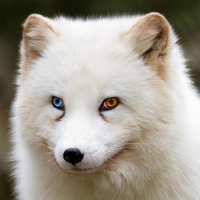 80 животных с красивейшими разноцветными глазами