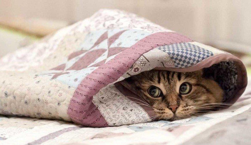 Хозяин, у нас лапки: как ухаживать за питомцами в холода
