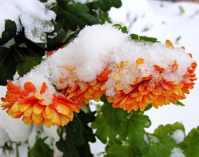 картинки ноябрь цветы люди сходятся