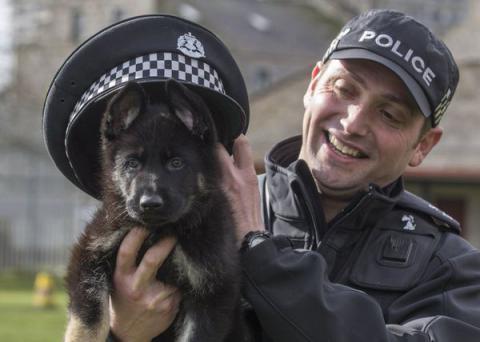 Семинедельный сотрудник шотландской полиции покоряет Сеть.