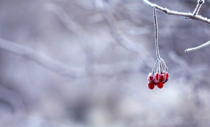 Найдена связь между холодом и ранней смертью