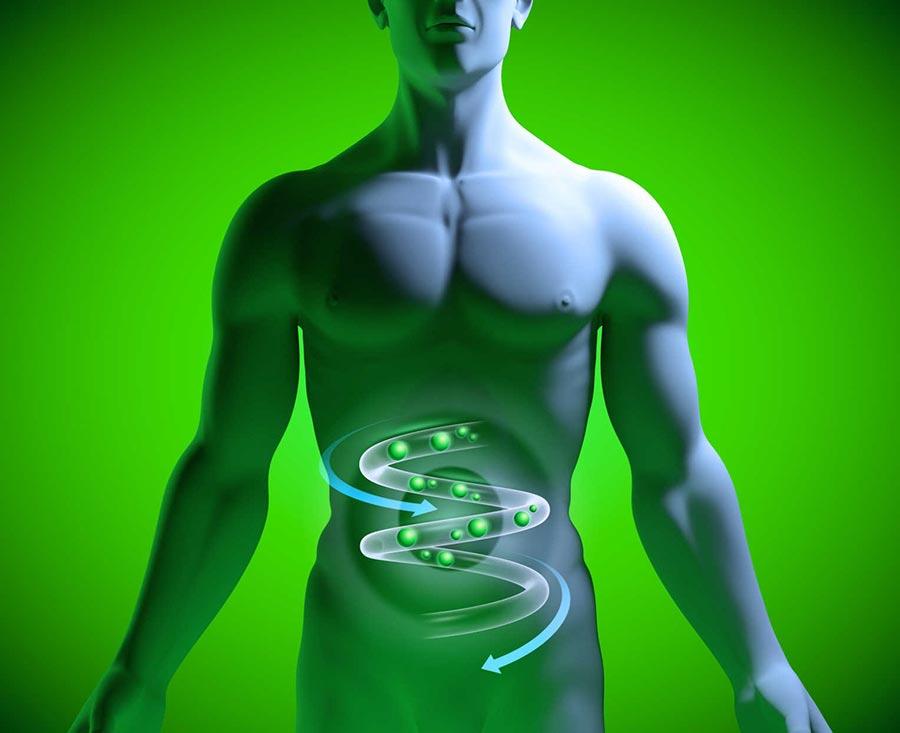 Картинки по запроÑу stomach health