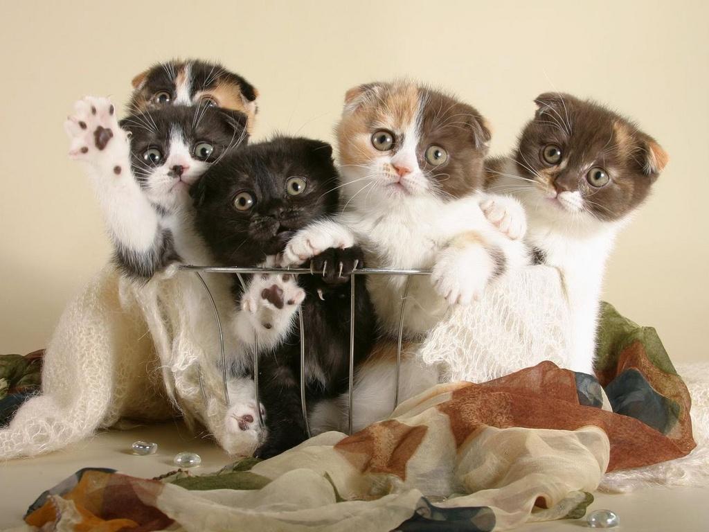Красивые картинки приколы кошки, город миасс