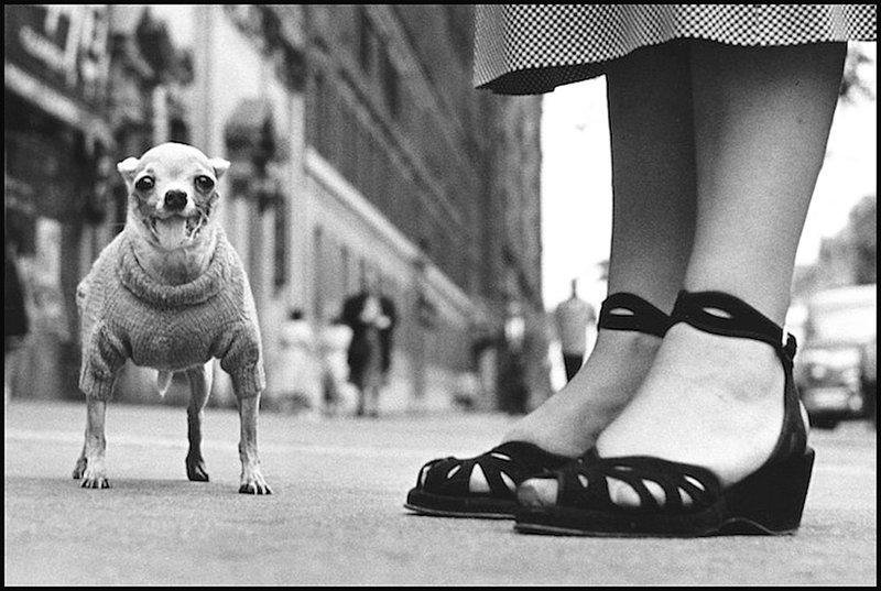 Эллиот Эрвитт - Нью-Йорк 1946 Весь Мир в объективе, история, фотография