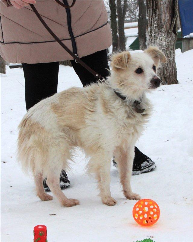 Слепые собаки Бимка и Гарсон из ставропольского приюта