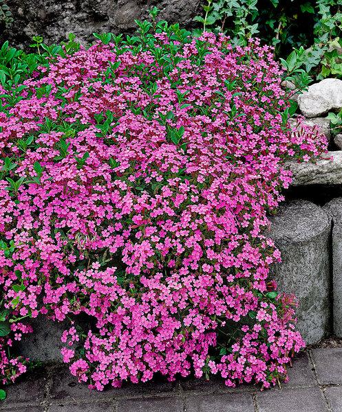 Цветочный ковер на годы! цветы