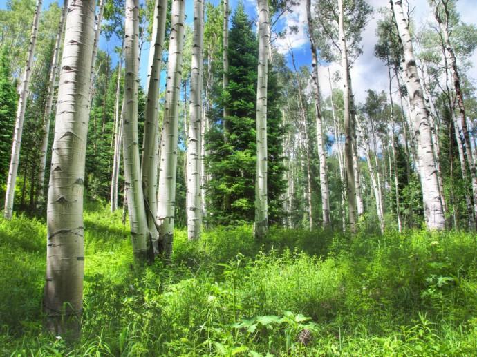 10 фактов о том, как мы теряем природу России