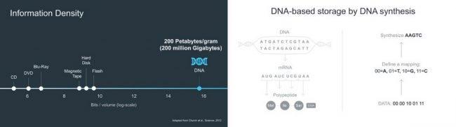 Когда у нас закончится место для хранения цифровых данных, мы будем использовать ДНК будущее