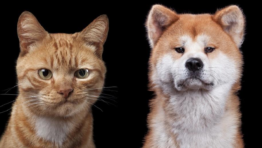 Фото с характером: художник делает портреты животных, передающие все их эмоции