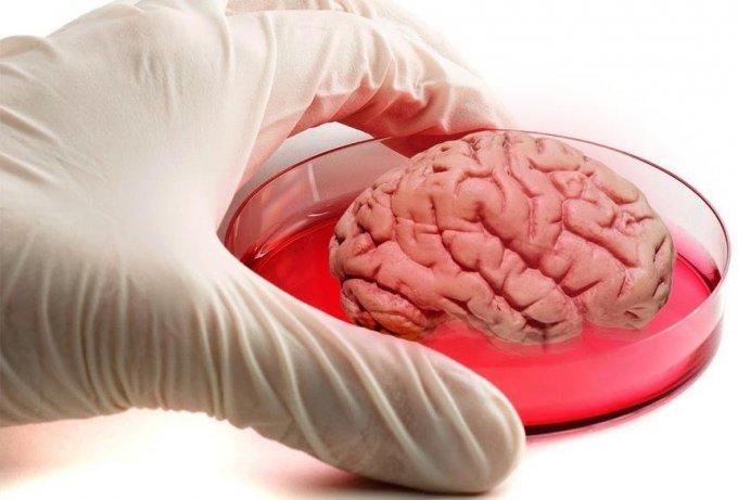 Миниатюрный мозг создан с использованием технологии 3D печати