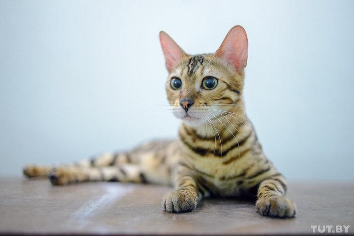 Коты не ведут себя как эгоис…