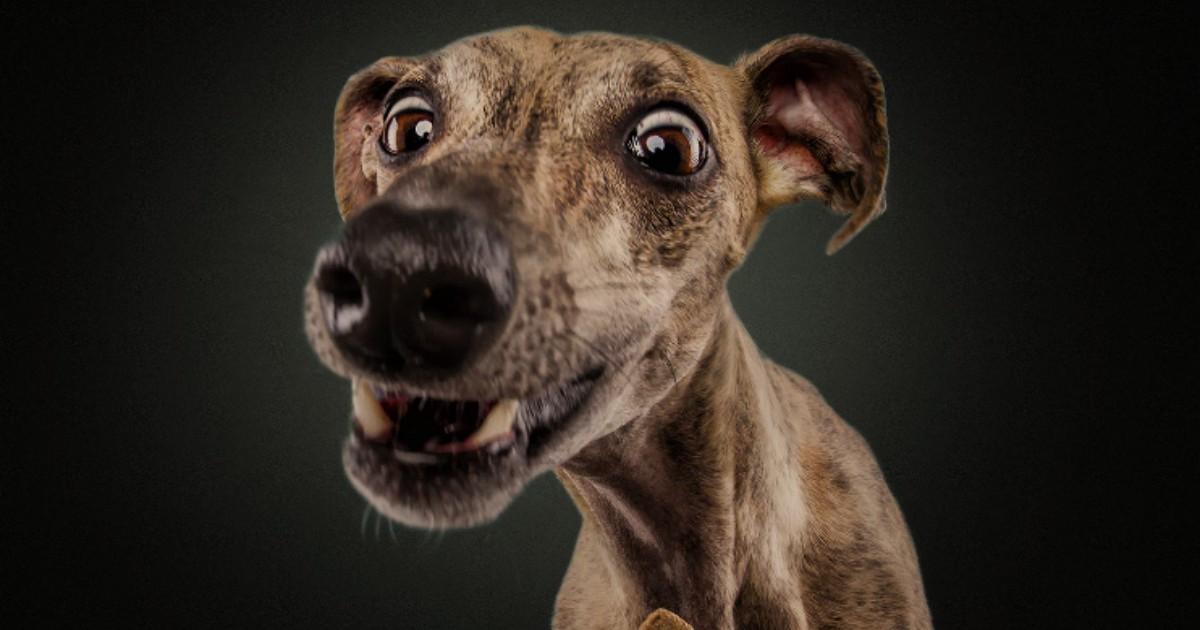 Канат днем, смешная картинка собак