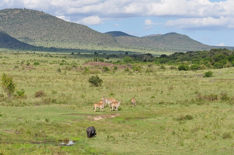 Из первых уст: незабываемые пейзажи Масаи-Мара МасаиМара, сафари, просто, животными, животных, Кении, время, саванны, машин, наиболее, заповедника, Серенгети, облегчает, кемпингах, части, крокодилов, можно, парка, геймдрайв, здесь