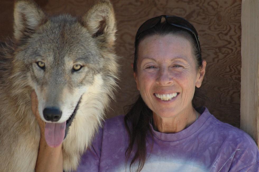 Жінка врятувала трьох вовченят від загибелі… Тепер це дорослі горді тварини!