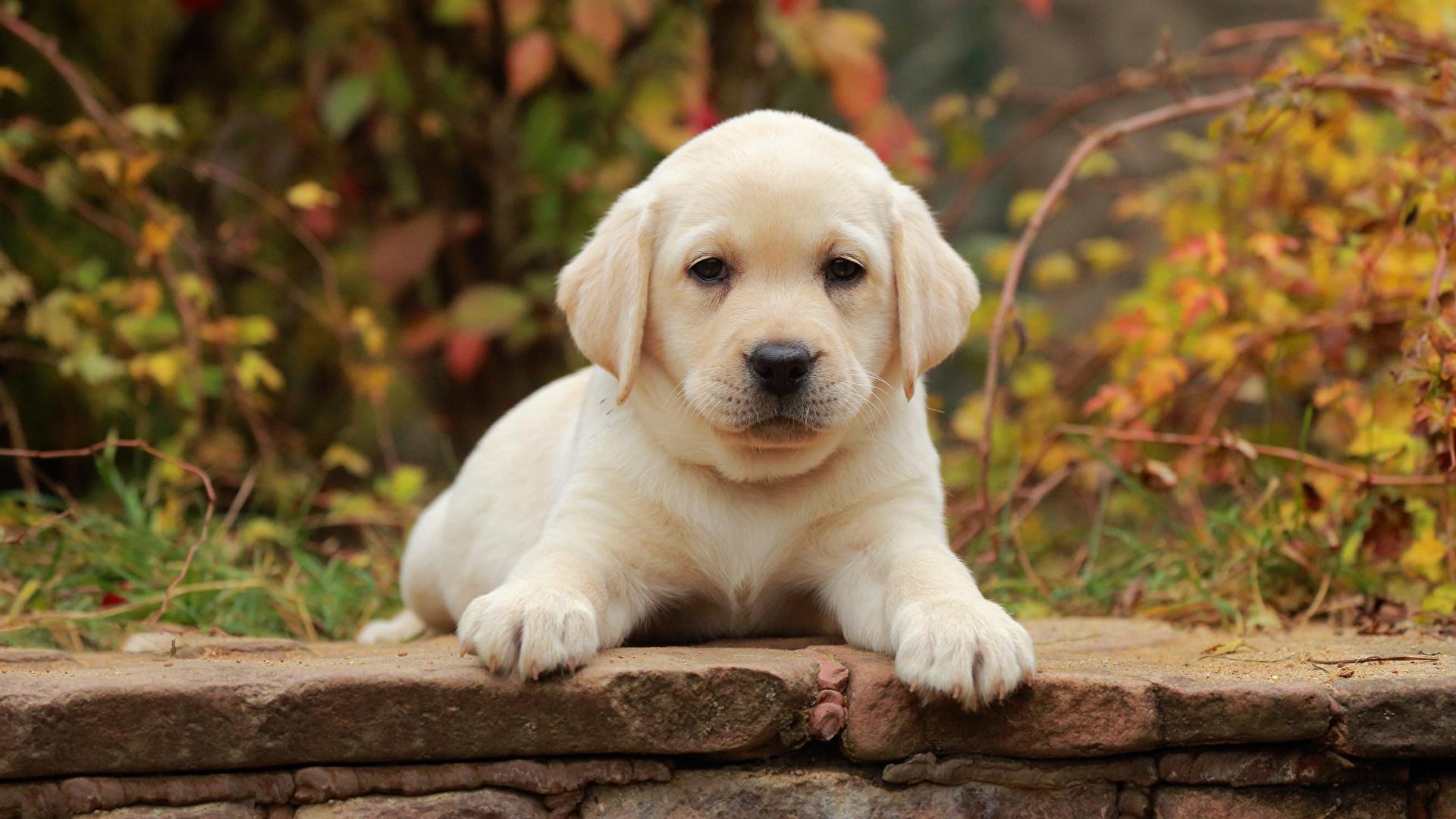 С чего начать воспитание щенка: дрессировка щенков — 7 правил домашние животные,наши любимцы,собаки,щенок