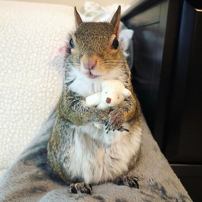 Спасённая белка не расстаётся со своим плюшевым мишкой и это до невозможности мило