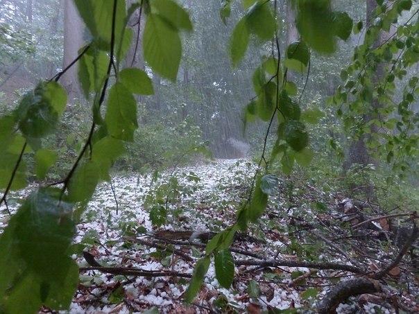 Выживание в осадках: дождь, туман, град, снег