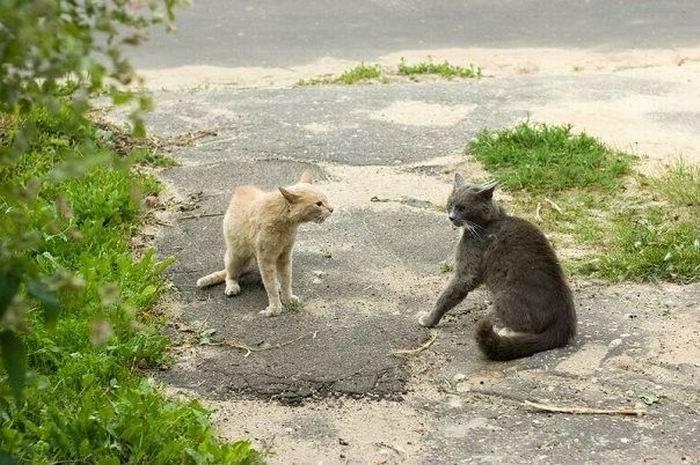 Драка котов (4 фото)