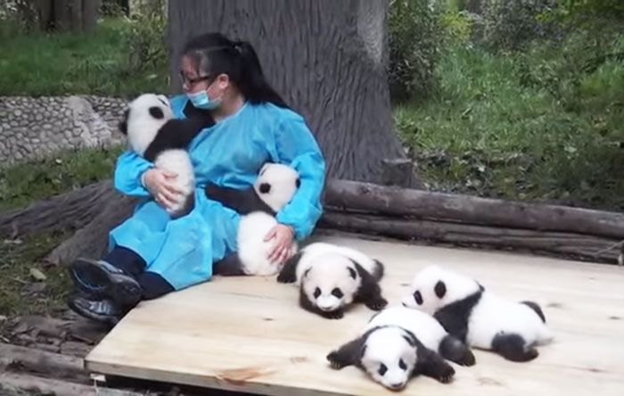 Медвежьи обнимашки или самая…