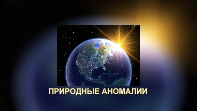 Аномальное тепло в Москве зацвели розы