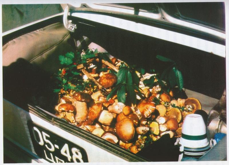 Грибной урожай: СССР в фото, подборка
